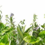 Лечение и очищение печени травами